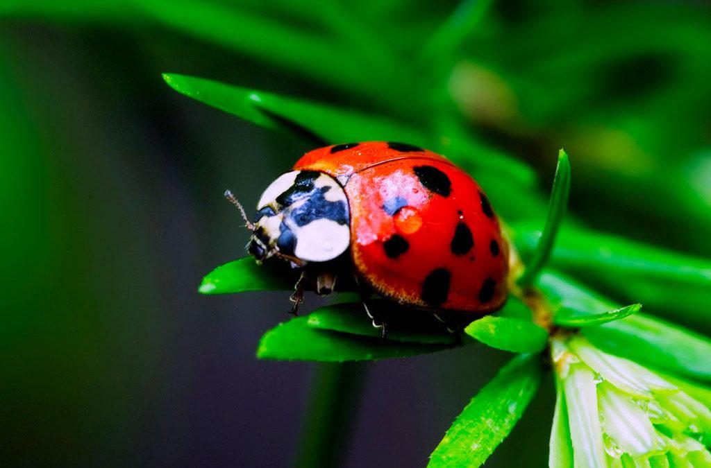 Ai bảo côn trùng là xấu xí