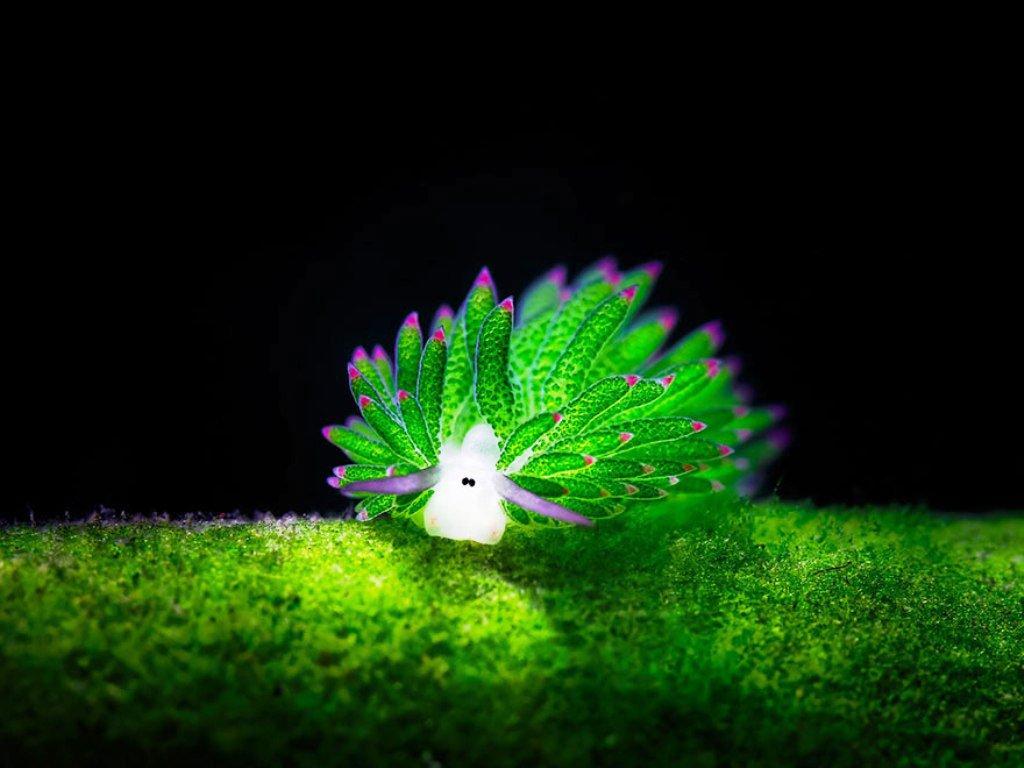 Những loài sên biển đẹp ngỡ ngàng dưới lòng đại dương