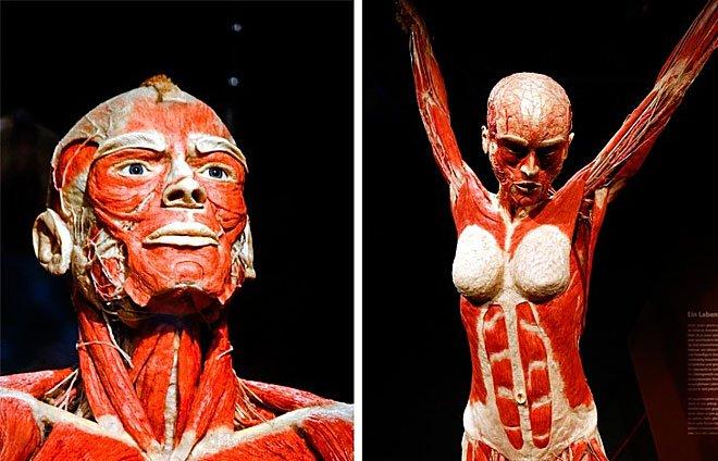 10 khả năng siêu việt của cơ thể người