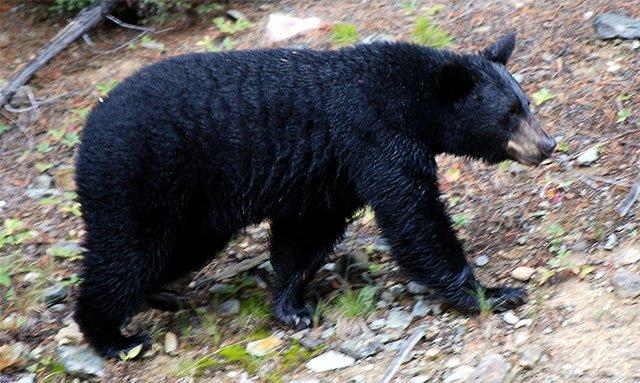 10 loài động vật kỳ thú chỉ có ở Bắc Mỹ