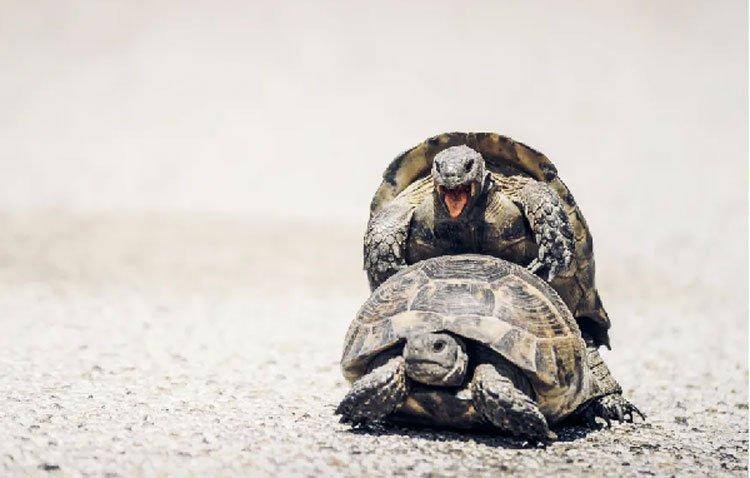 10 sự thật về đời sống tình dục của động vật
