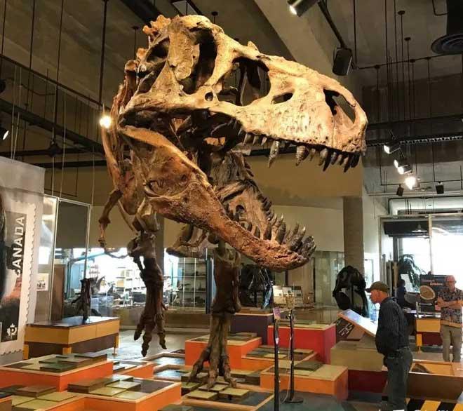 21 giai đoạn cuộc đời của khủng long bạo chúa, hai trong số đó cực kỳ quan trọng và giúp chúng trở nên to lớn