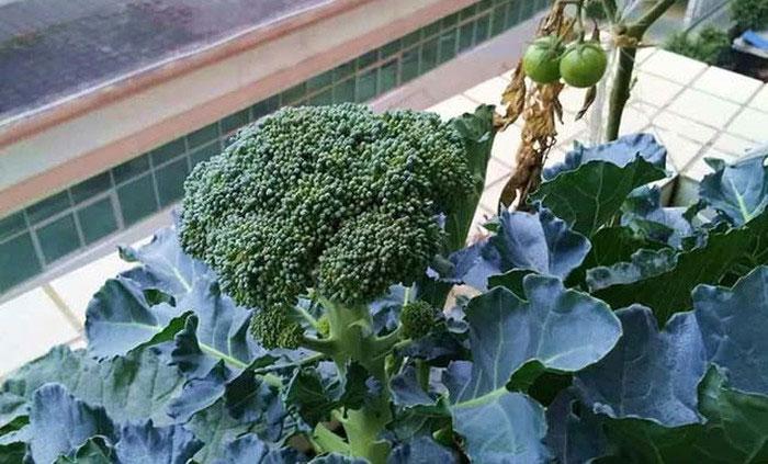 4 loại rau quả là thần dược chống ung thư, người Việt chớ coi thường