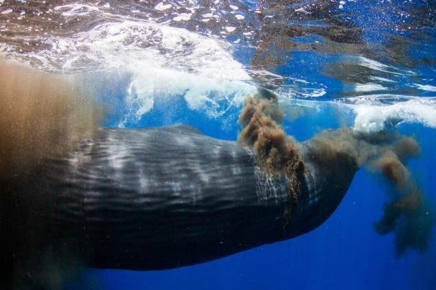 5 câu chuyện chứng minh hậu môn có thể là thứ kỳ quặc nhất thế giới động vật