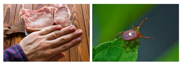 5 loài vật sẽ khiến bạn phải khốn khổ nếu bị cắn bởi những tác dụng phụ quái dị
