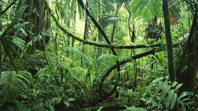 5 sự thật kỳ thú về rừng nhiệt đới Amazon