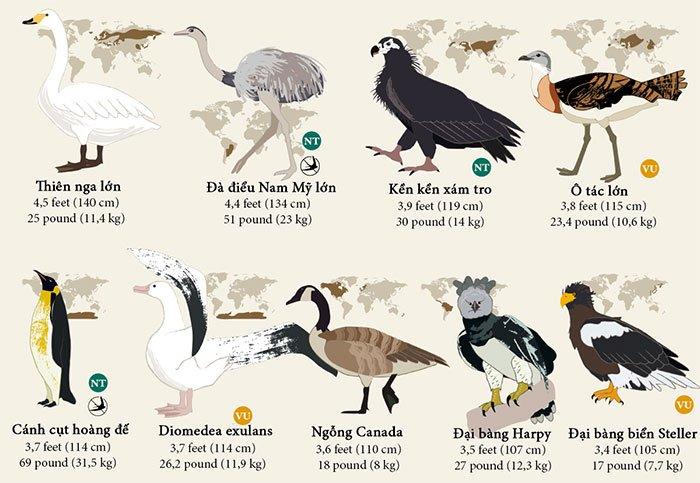 55 loài chim được xếp hạng từ lớn đến nhỏ trên thế giới