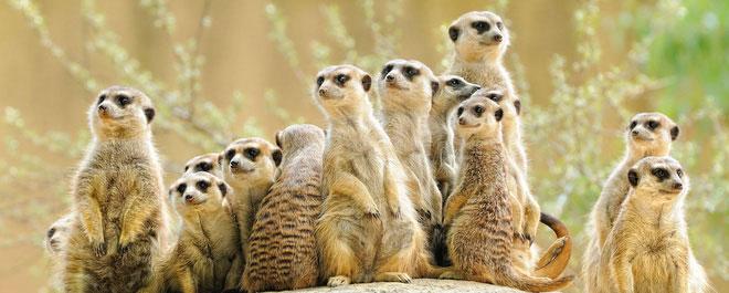 6 loài vật có khả năng thích nghi tuyệt vời nhất trong sa mạc khô cằn