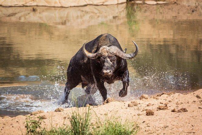 7 sự thật về các loài vật sẽ giúp bạn hiểu: Tự nhiên là một thế giới đầy rẫy những điều đáng sợ