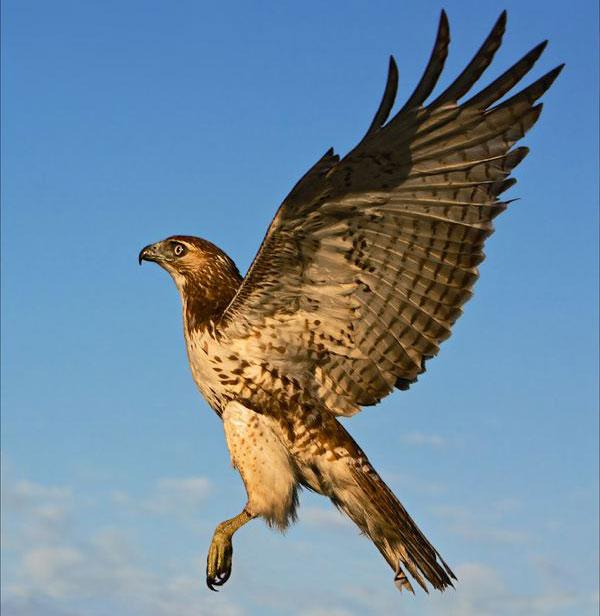 8 loài chim đáng sợ có khả năng giết người