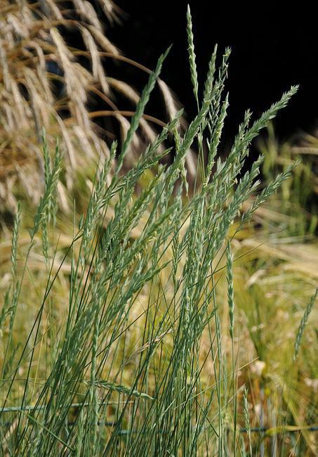 8 loại cỏ dại tưởng vô thường lại có giá trị không tưởng