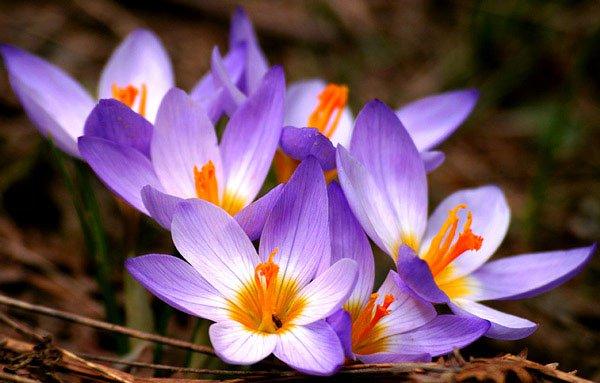 8 loài hoa đắt đỏ nhất hành tinh, có tiền cũng chưa chắc mua được