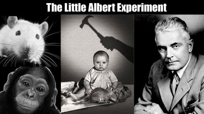 Albert bé nhỏ - Một trong những thí nghiệm khủng khiếp nhất trong lịch sử