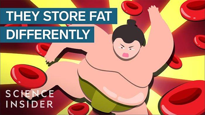 Ăn tới 7.000 kcal/ngày, tại sao đô vật sumo không mắc bệnh như người béo phì?