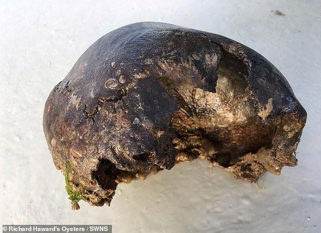 Anh: Đi bắt hàu ngoài biển, phát hiện sọ người 3.000 năm tuổi