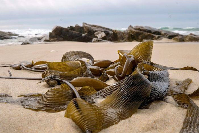 Australia nóng kỷ lục, biển thành nồi lẩu nấu chín nhiều sinh vật