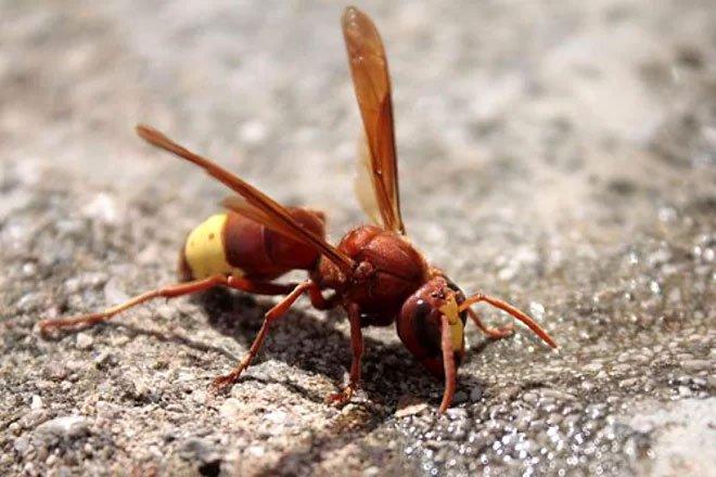 Ba loài côn trùng góp công lớn cho y học
