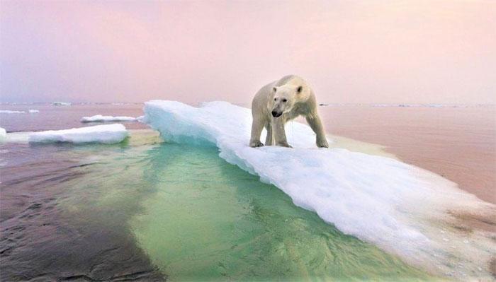 Bắc Cực ấm lên gây nguy cơ lây lan virus lạ và chất thải hạt nhân