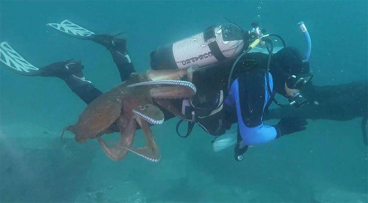 Bạch tuộc khổng lồ tấn công thợ lặn dưới đáy biển