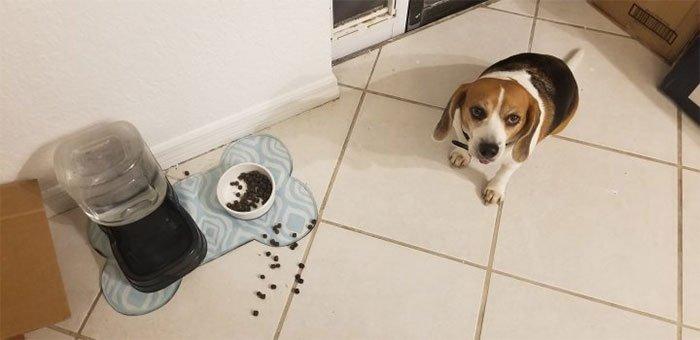 Bạn có thể cho chó ăn thức ăn của mèo hay không?