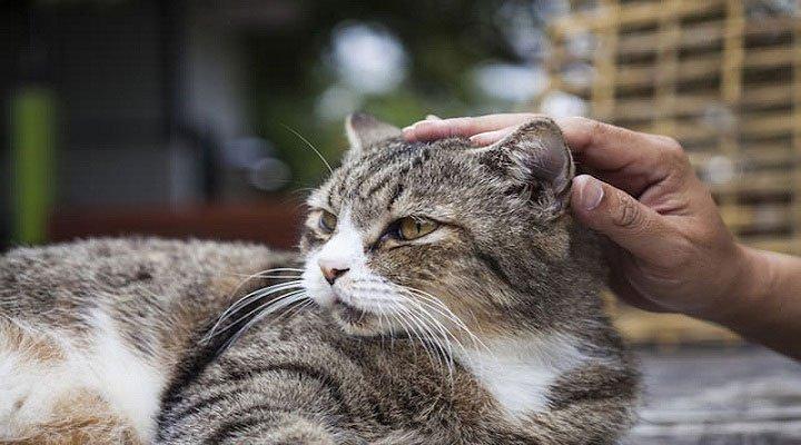 Bạn đã biết vuốt ve mèo sao cho đúng chưa?