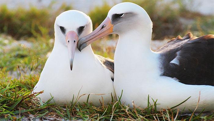 Bạn nghĩ chim sống được bao nhiêu năm? Kết quảsẽ khiến bạn phải bất ngờ đấy!