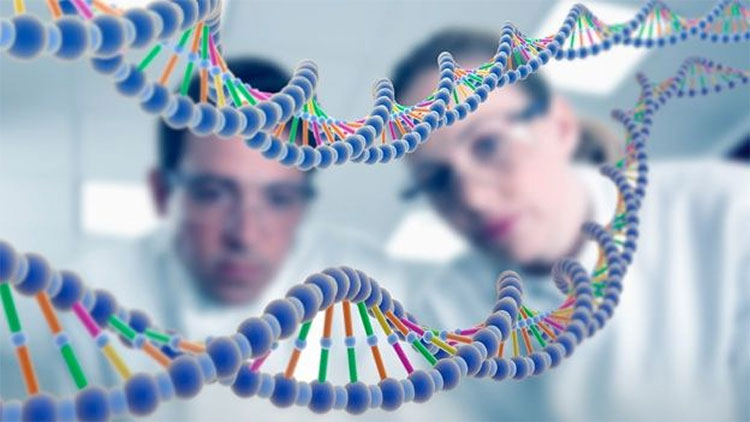 Bằng chứng loài người có nguồn gốc từ một cặp bố mẹ