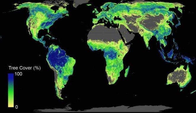 Báo cáo khoa học hướng dẫn cần trồng bao nhiêu cây thì đủ để cứu lấy Trái đất