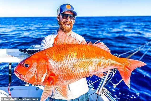 Bắt được cá vàng khổng lồ, tìm hiểu mới biết là loài hiếm gặp