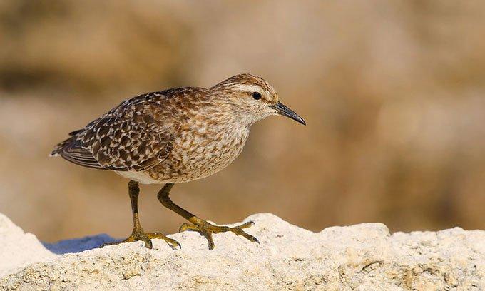 Bất ngờ phát hiện hóa thạch tiết lộ loài chim lội nước mới