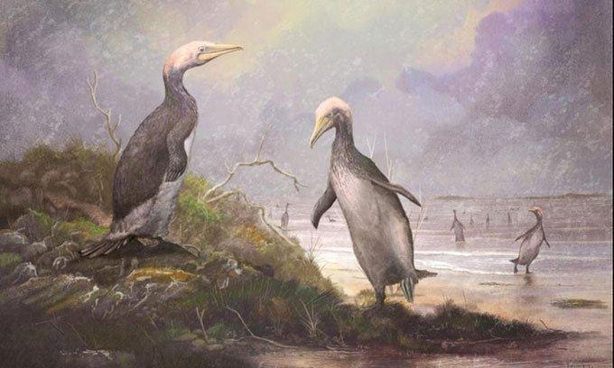Bất ngờ phát hiện sinh vật cao 1,8m giống chim cánh cụt khổng lồ