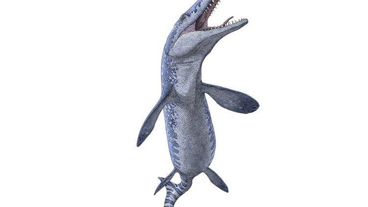 Bất ngờ tìm thấy hoá thạch quái vật biển cổ đại khi khai thác đá quý