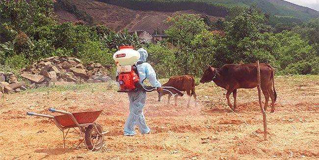 Bệnh lạxuất hiện, lây lan nhanh trên đàn trâu bò