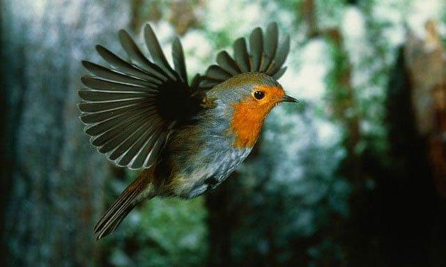 Bí ẩn giác quan lượng tử của loài chim