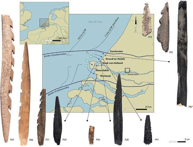 Bí ẩn hài cốt người 7.500 tuổi đầy răng cưa dạt vào bờ biển