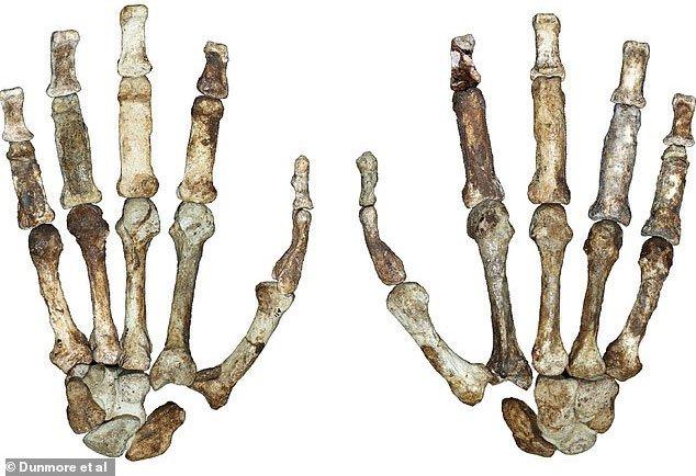 Bí ẩn sinh vật 2 triệu tuổi mang bàn tay của con người