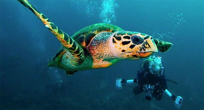 Bí ẩn về hành trình di cư vĩ đại của rùa biển từ Nhật Bản đến California được hé lộ