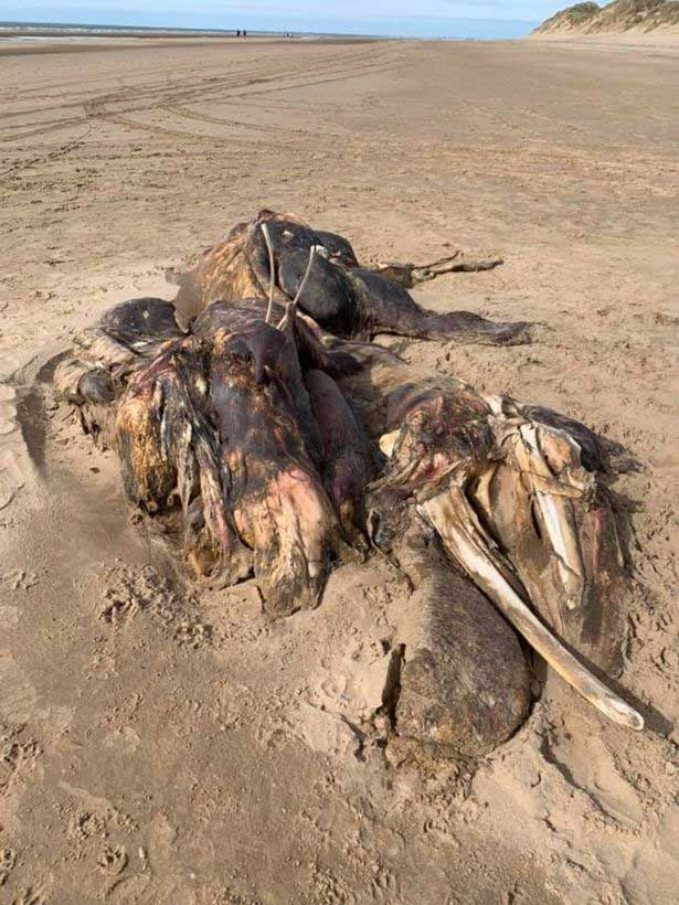 Bí ẩn xác quái vật dài 4,5m dạt vào bờ, dân mạng tranh luận kịch liệt về danh tính sinh vật vì mãi vẫn không nhìn ra nó là gì