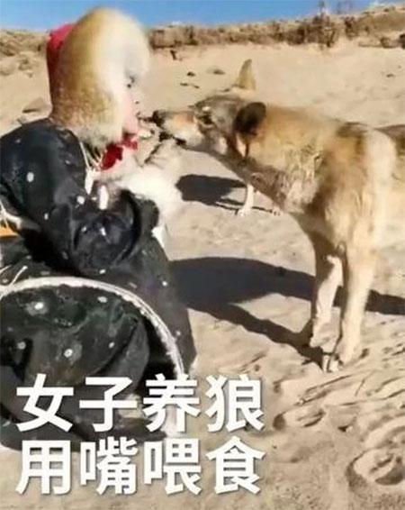Bí kíp thuần hóa chó sói của cô gái 20 tuổi
