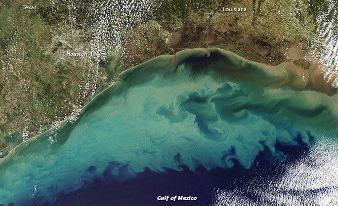 Biển địa ngục đang lan rộng ở Mỹ, sinh vật bơi vào là chết