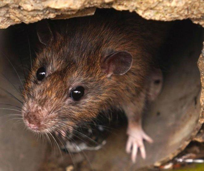 Biến đổi khí hậu đã giải phóng virus bệnh tật từ động vật hoang dã vào con người