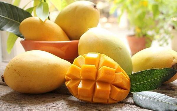 Biến phụ phẩm trái xoài thành giấm thơm ngon nhờ lên men hồi lưu