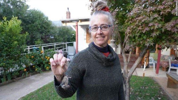Binh đoàn chuột hàng triệu con đang xâm chiếm nước Úc khiến nhiều người kinh hãi