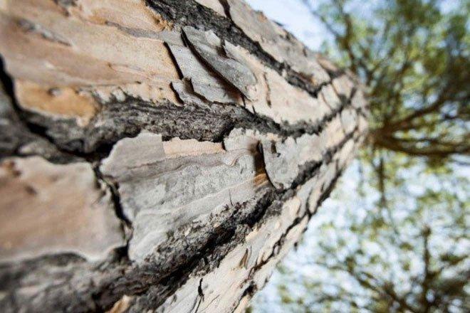 Bộ lọc nước từ gỗ tự nhiên vừa rẻ, vừa sẵn có này có thể loại bỏ 99% vi khuẩn trong nước ô nhiễm