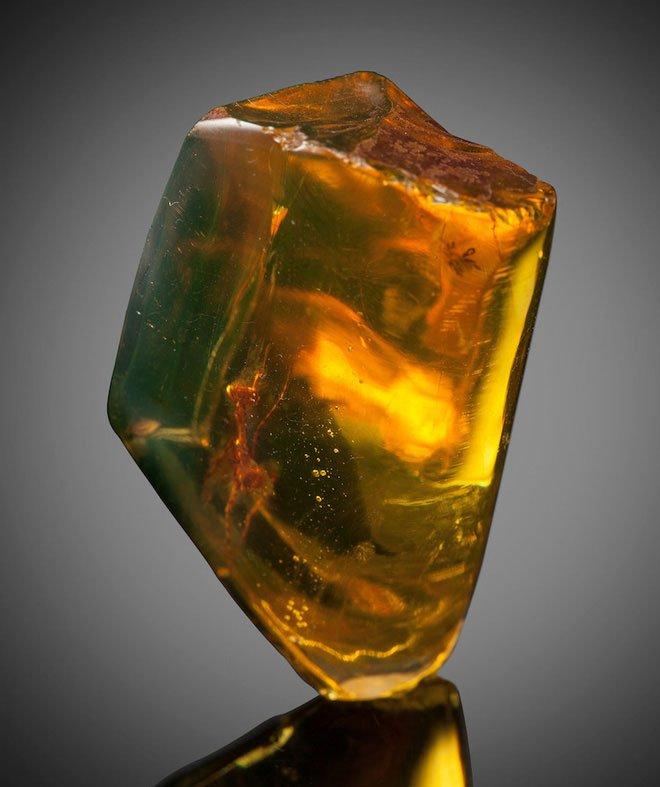 Bọ ngựa 30 triệu năm tuổi được bảo quản hoàn hảo trong mảnh hổ phách