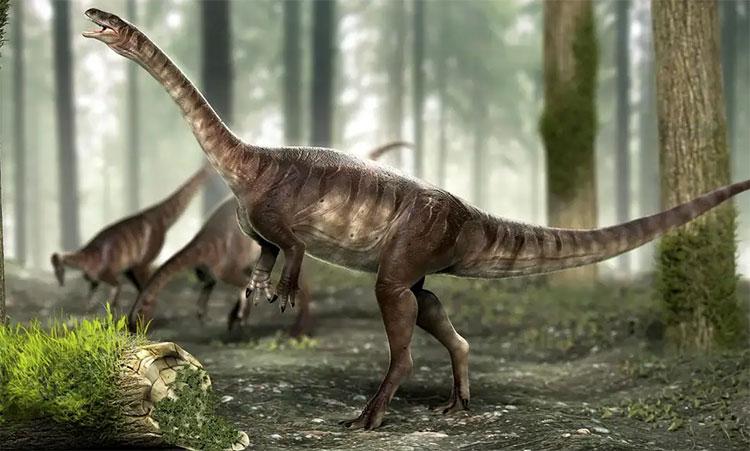 Brazil phát hiện hóa thạch khủng long cổ dài lâu đời nhất thế giới