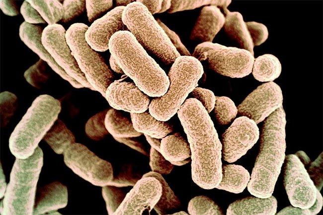 Bước ngoặt vĩ đại: Con người đã lập trình được vi khuẩn