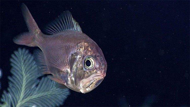 Cá giống dài và những loài vừa vào sách đỏ vì nguy cơ tuyệt chủng