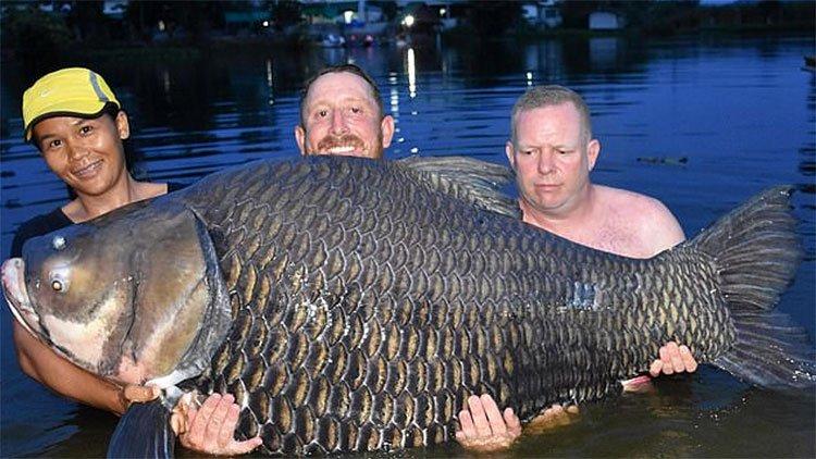 Cá hô siêu khủng cắn câu cần thủ Anh