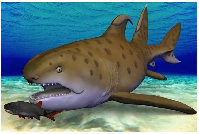 Cá mập Godzilla 300 triệu năm tuổi được xác định là loài mới